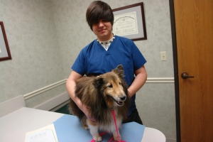 Eric the Sheltie