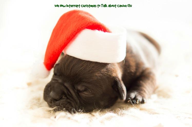 ChristmasPuppy2