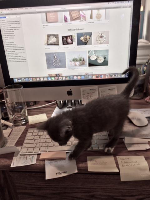 Kitten Pic 1