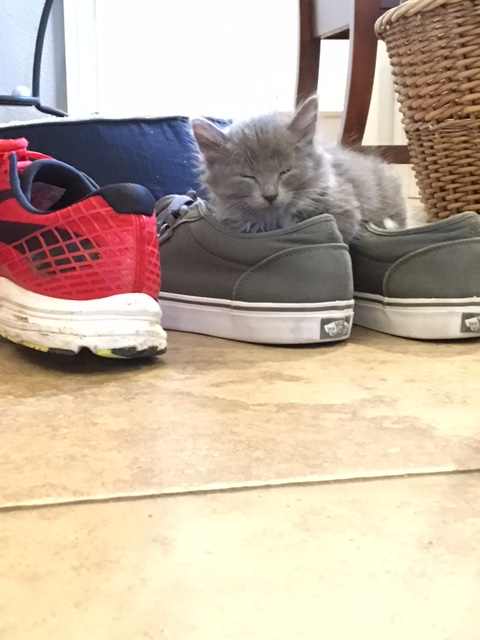kitten pic 4 shoe